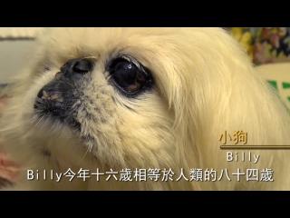 樹仁大學新聞與傳播學系2012製作 - 狗久健康